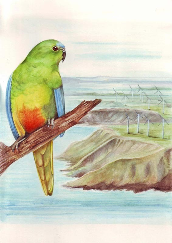 1_bir_-orange-bellied-parrot
