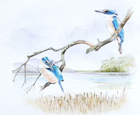 1_web-kingfisher