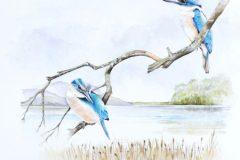 1_web-kingfisher